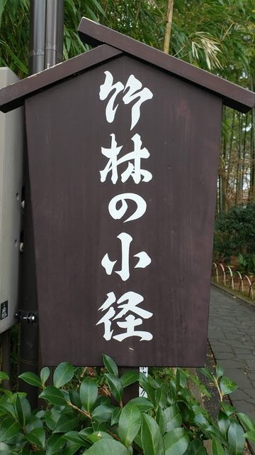 修善寺/竹林の小径