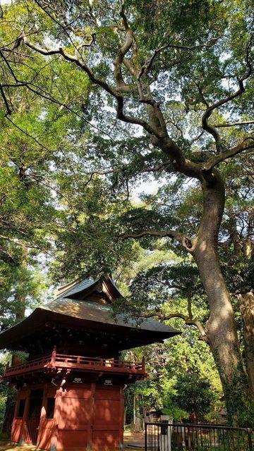 神武寺なんじゃもんじゃの木