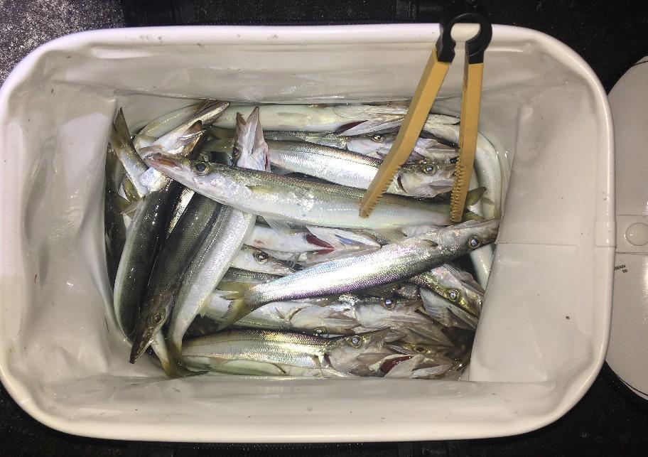 f:id:burgessbutterflyfish:20191230194331j:plain