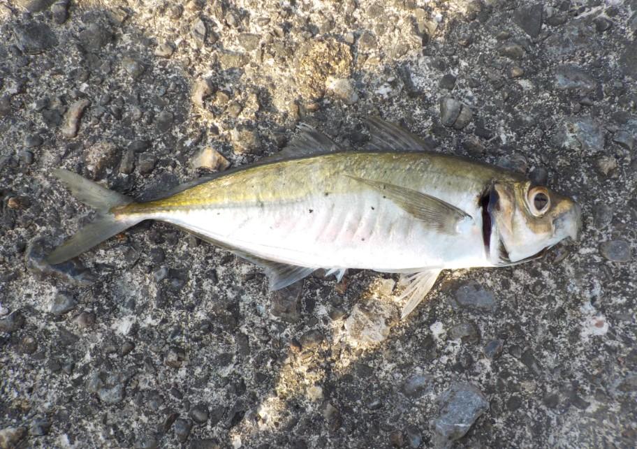 f:id:burgessbutterflyfish:20200409211608j:plain