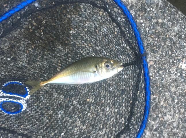 f:id:burgessbutterflyfish:20200721143557j:plain