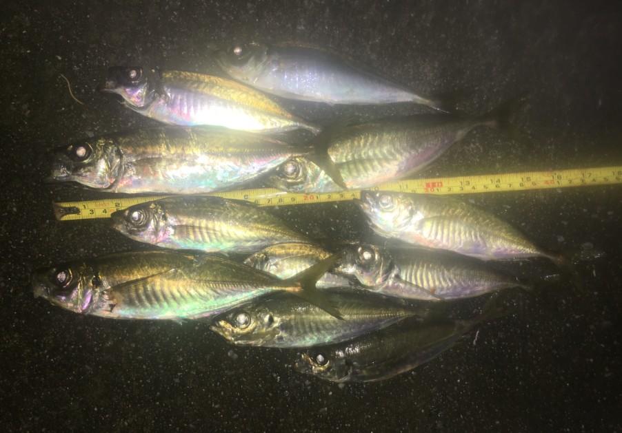 f:id:burgessbutterflyfish:20200721143601j:plain