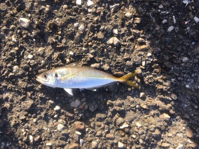 f:id:burgessbutterflyfish:20201121121110j:plain