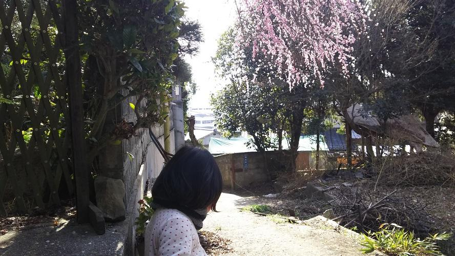 f:id:butao_o:20170320163840j:plain