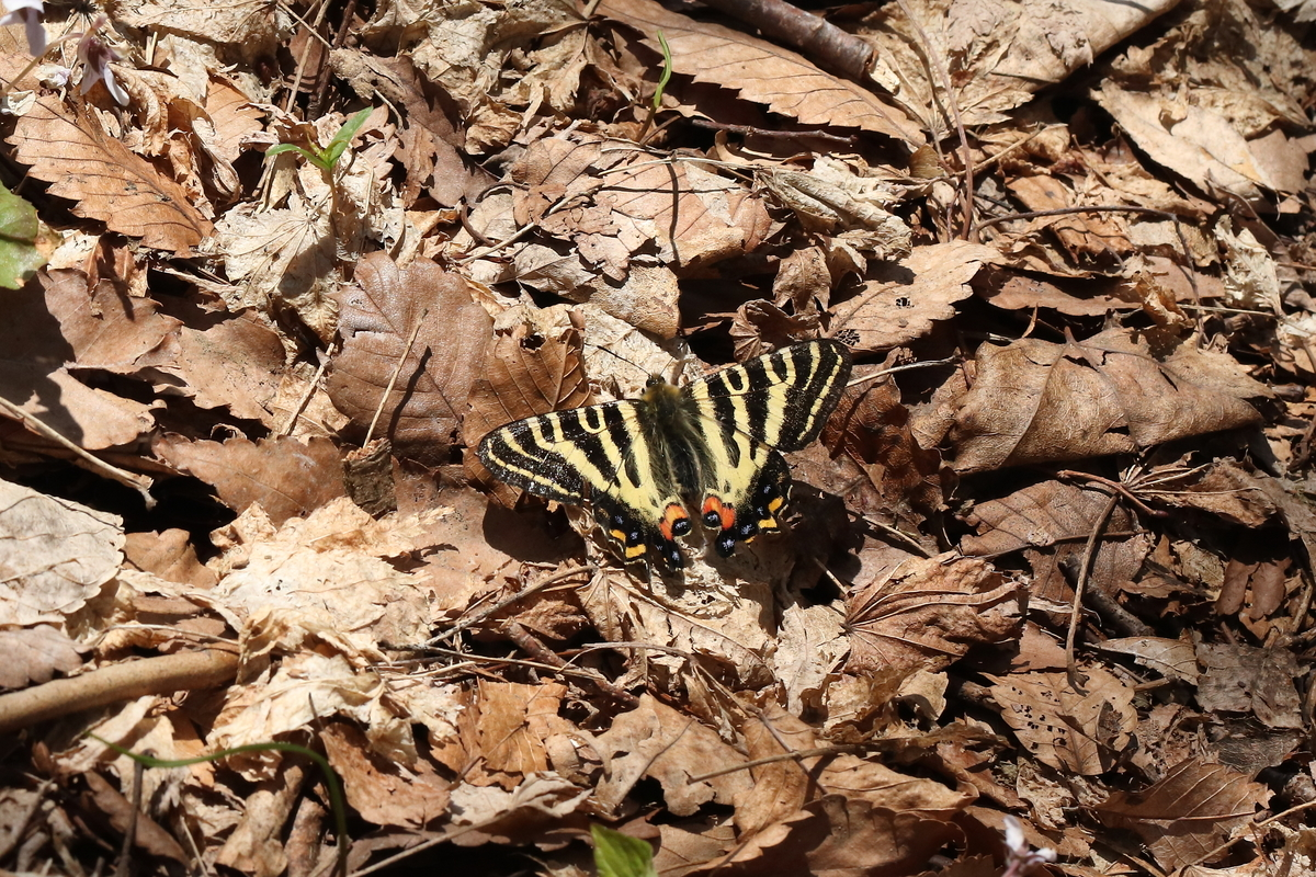 f:id:butterflyer:20190420101957j:plain