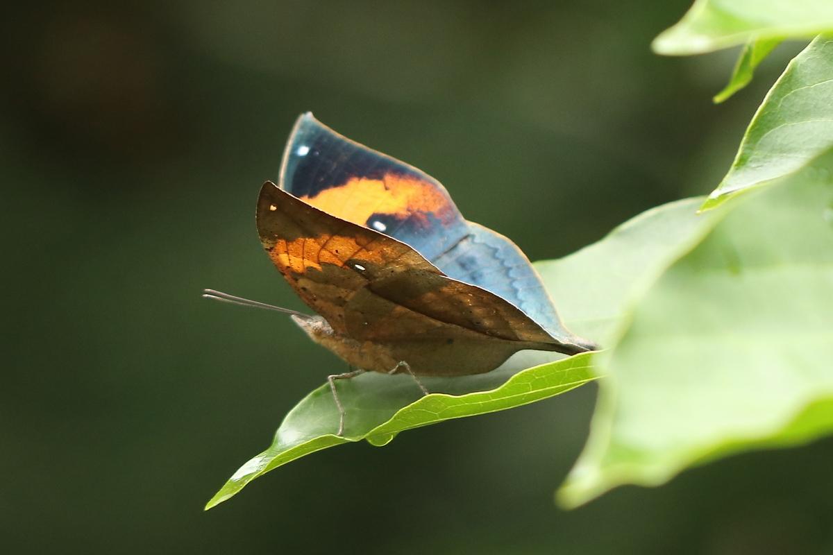 f:id:butterflyer:20190801233049j:plain