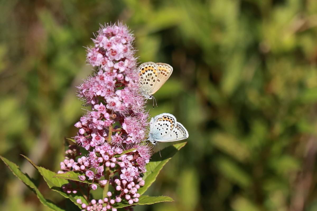 f:id:butterflyer:20190802213939j:plain
