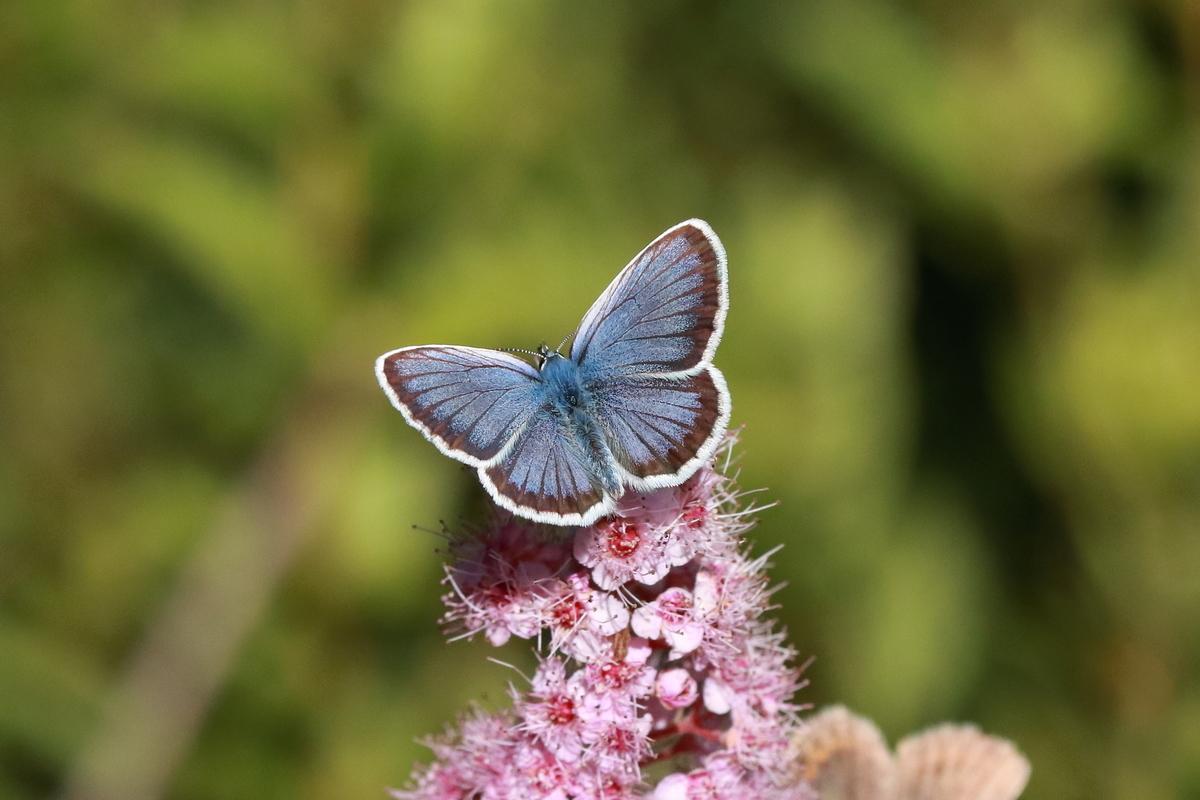 f:id:butterflyer:20190802214241j:plain