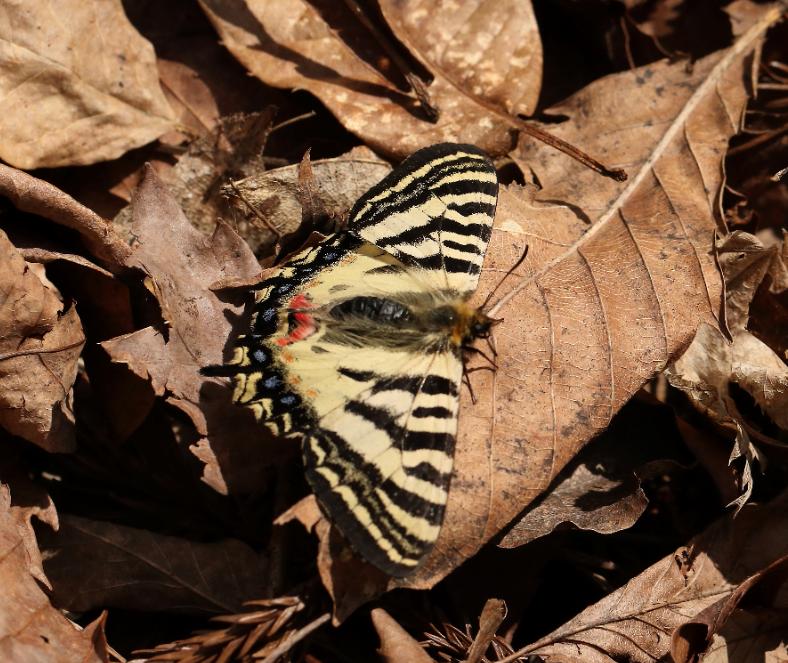 f:id:butterflyer:20190805214313p:plain