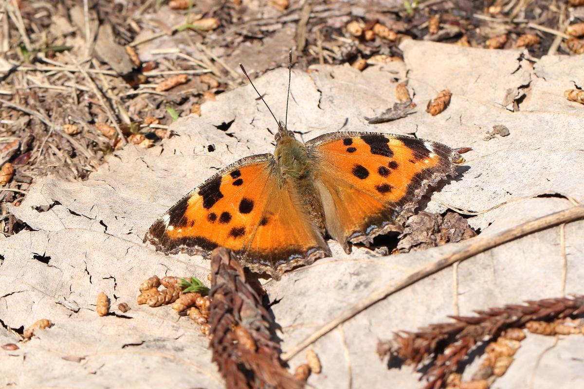 f:id:butterflyer:20190805220720j:plain