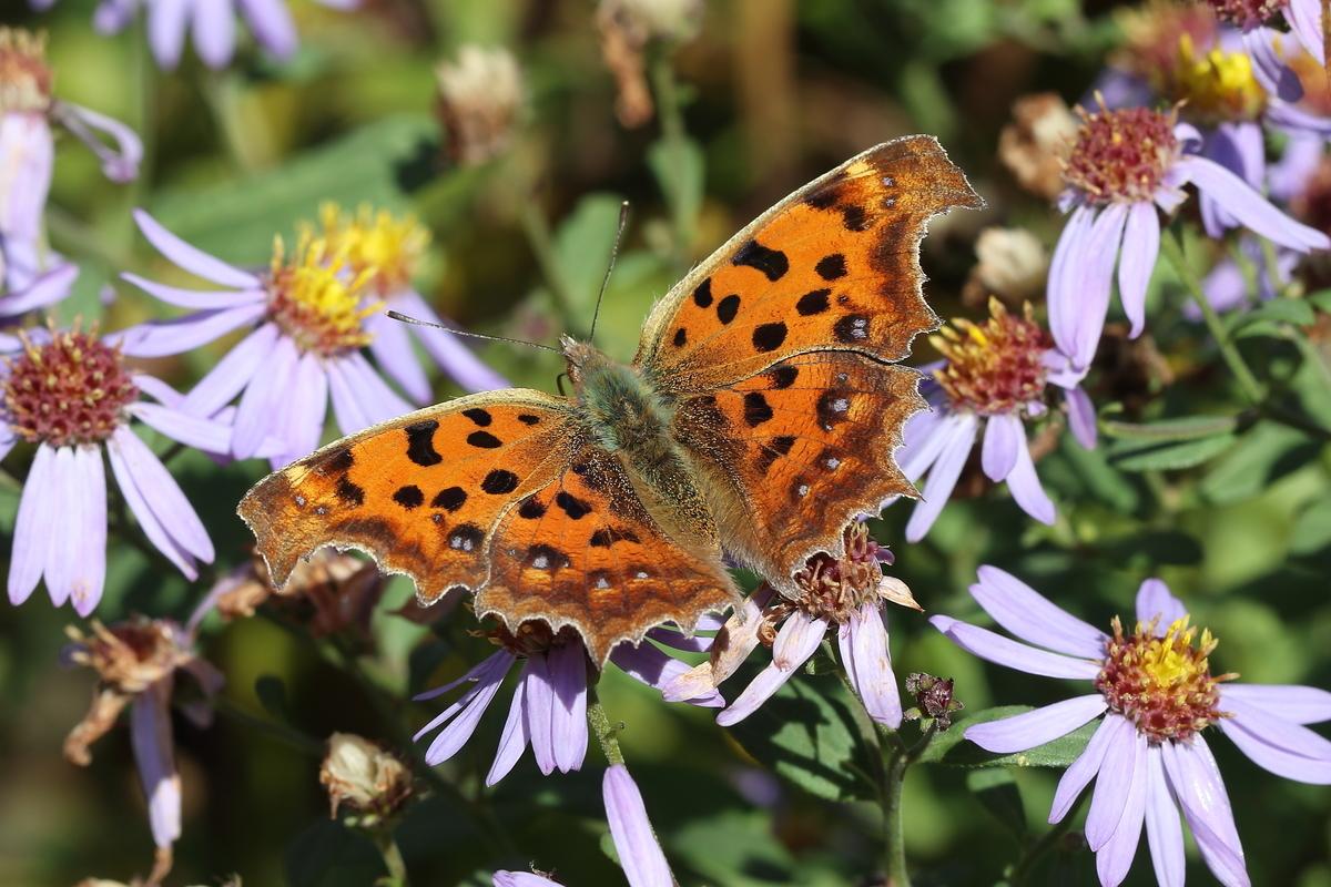 f:id:butterflyer:20190807185857j:plain