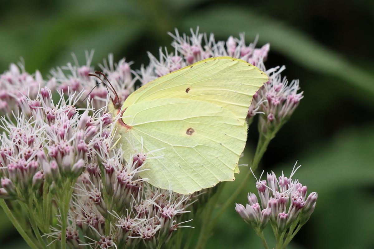 f:id:butterflyer:20190811103839j:plain