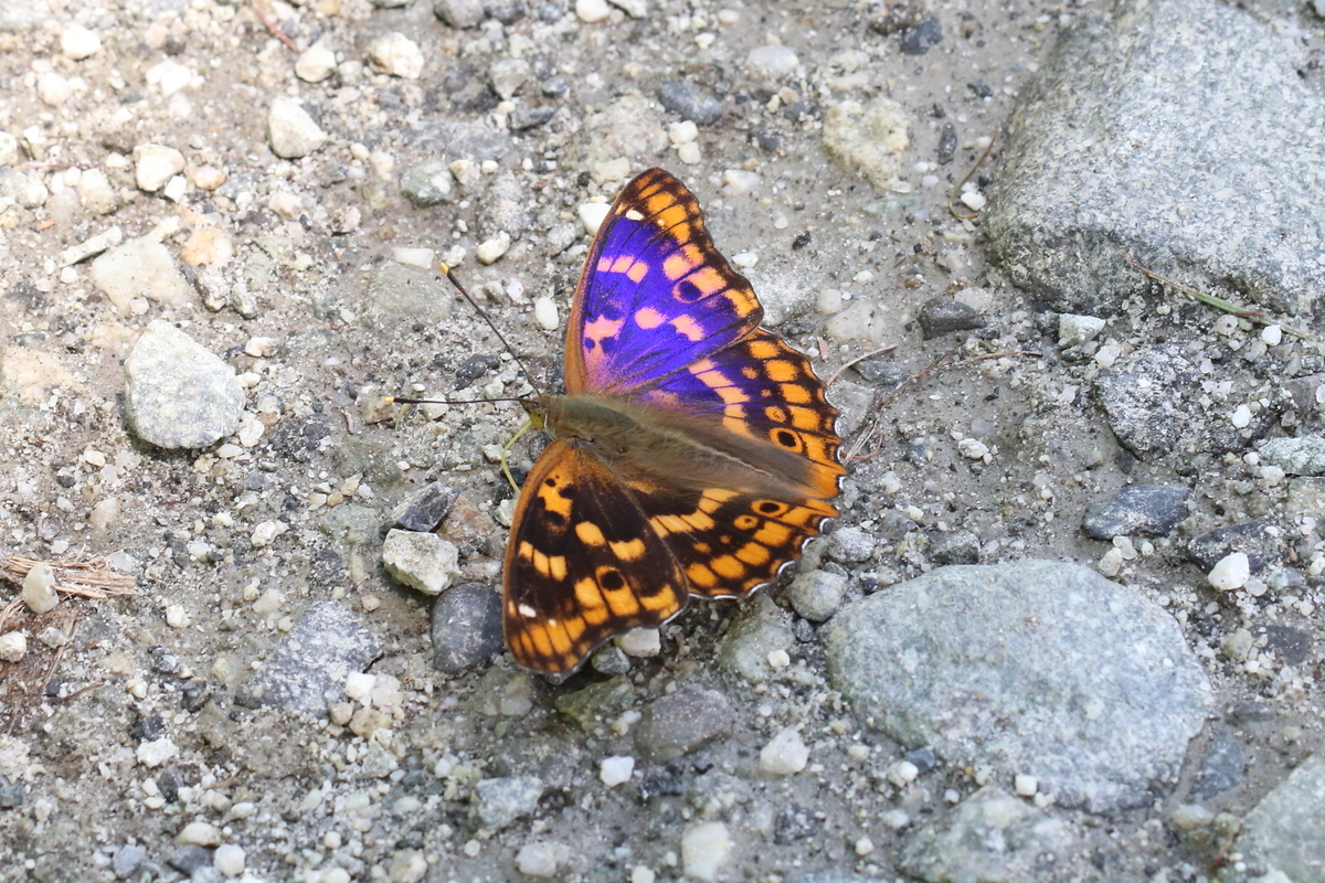 f:id:butterflyer:20190812220814j:plain