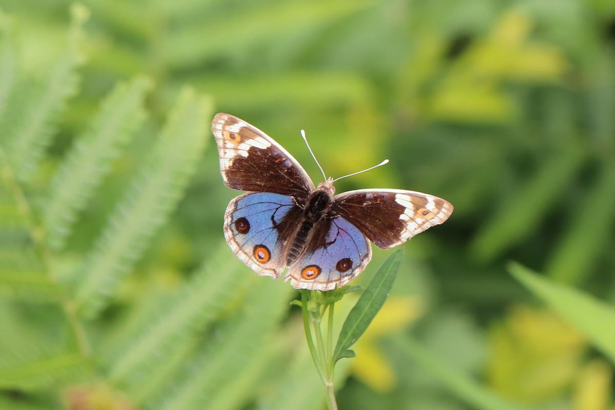 f:id:butterflyer:20190813082149j:plain