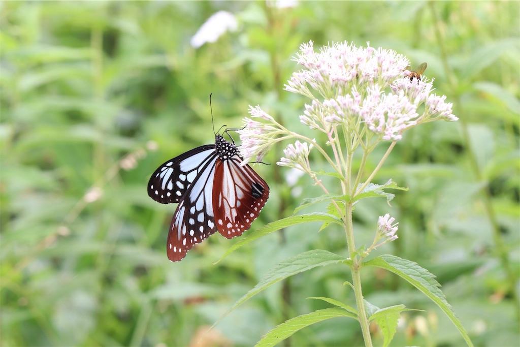 f:id:butterflyer:20190813140312j:plain