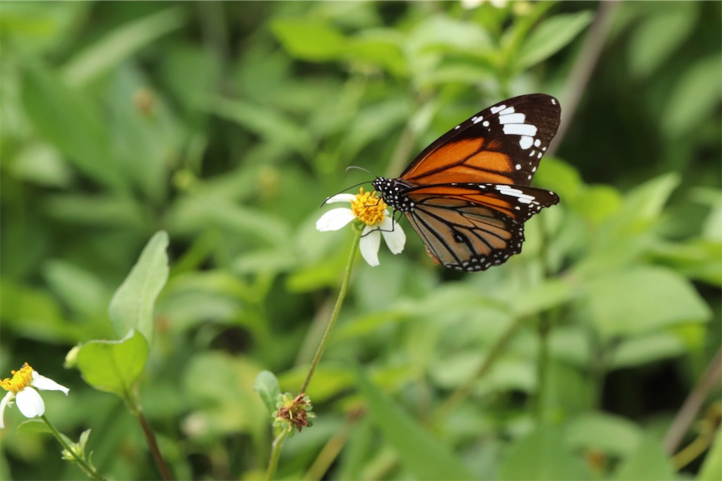 f:id:butterflyer:20190815194958j:plain