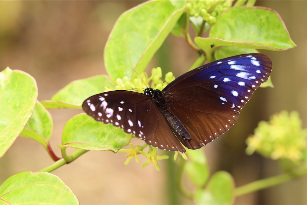 f:id:butterflyer:20190815201000j:plain