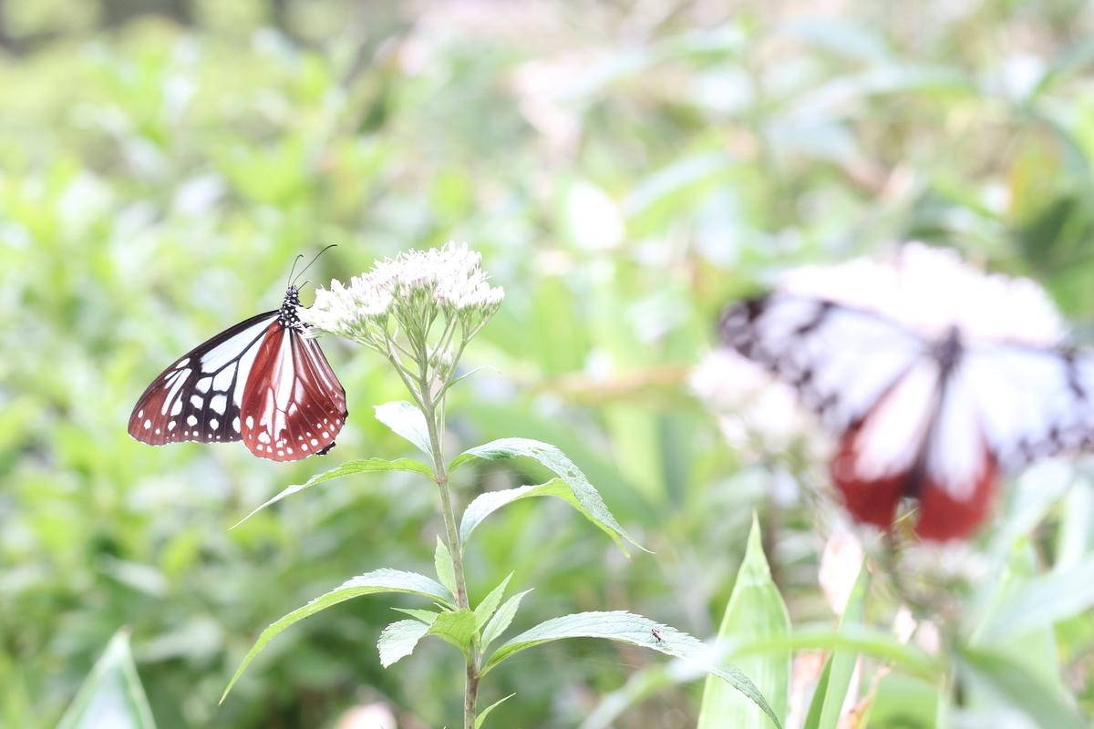 f:id:butterflyer:20190818091934j:plain