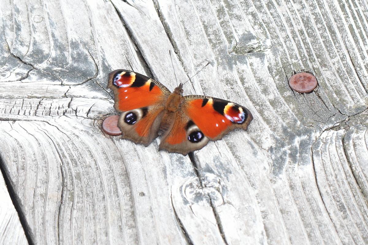 f:id:butterflyer:20190818120451j:plain