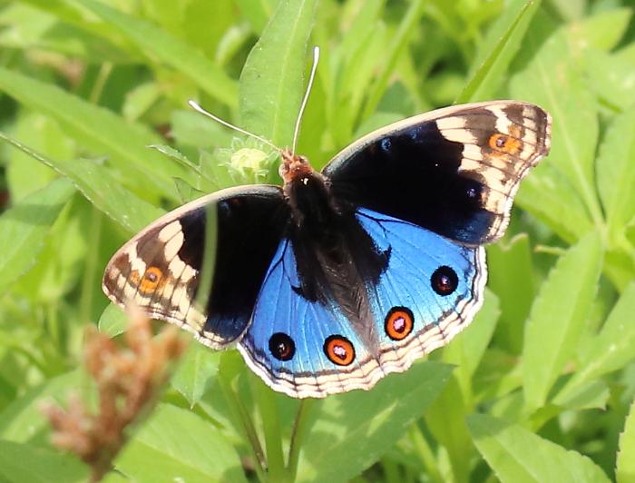 f:id:butterflyer:20190818201941p:plain