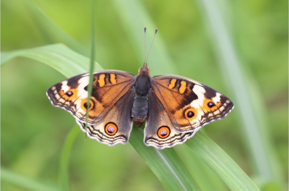 f:id:butterflyer:20190818202026p:plain
