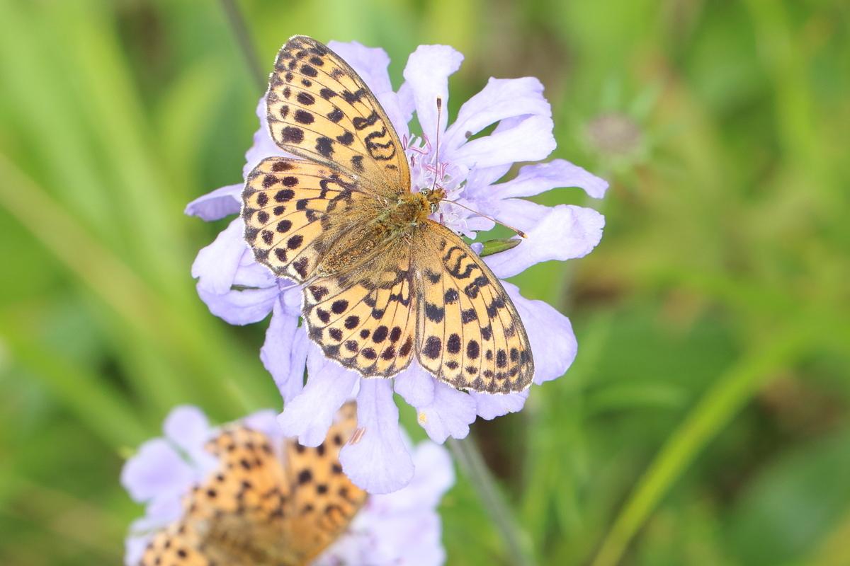 f:id:butterflyer:20190825205844j:plain