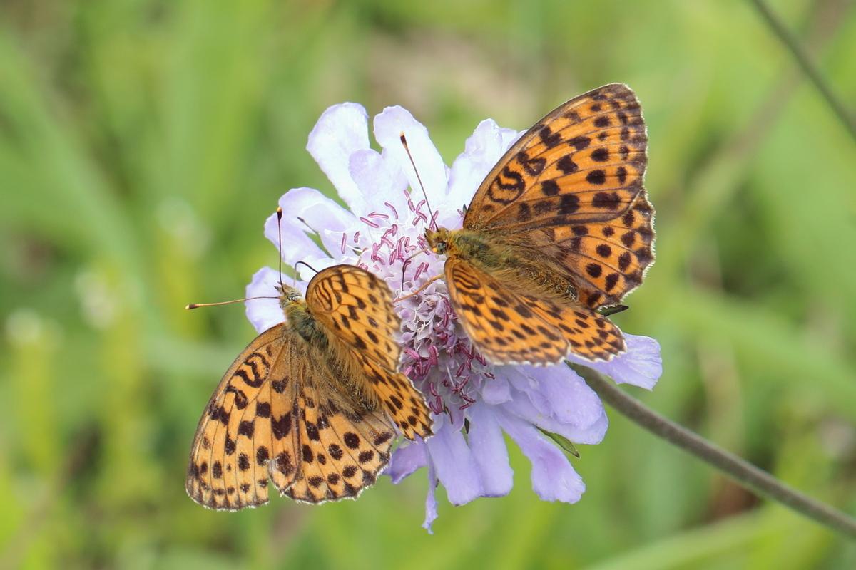 f:id:butterflyer:20190825210011j:plain