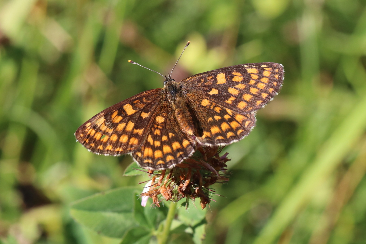 f:id:butterflyer:20190825234133j:plain