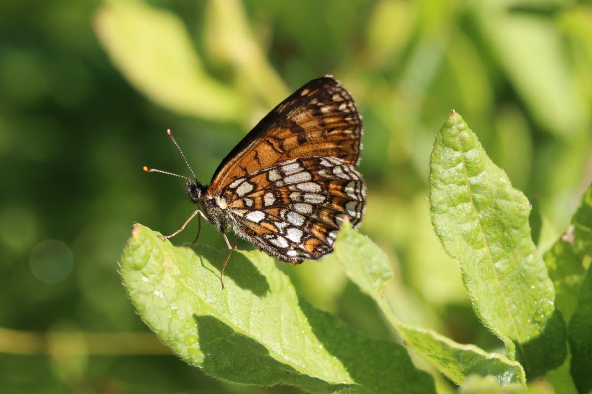 f:id:butterflyer:20190825234900p:plain