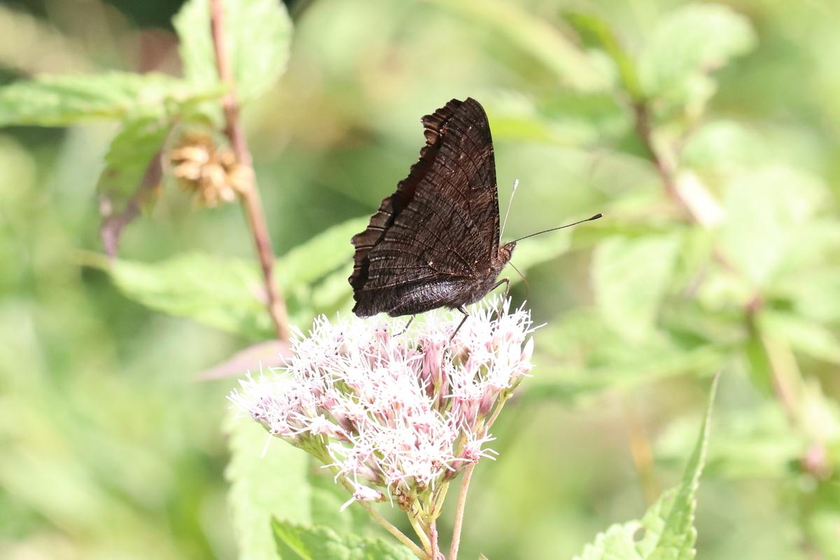 f:id:butterflyer:20190828232053j:plain