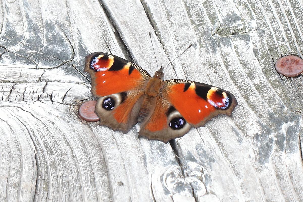 f:id:butterflyer:20190829000420j:plain