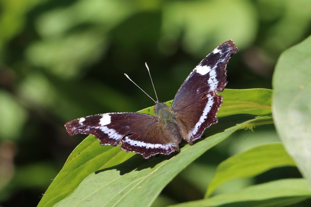 f:id:butterflyer:20190830211651j:plain