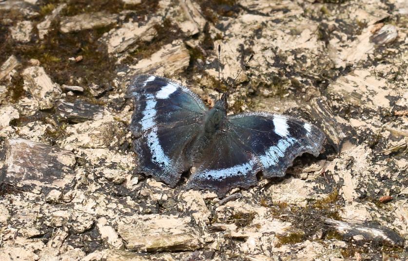 f:id:butterflyer:20190830211859p:plain