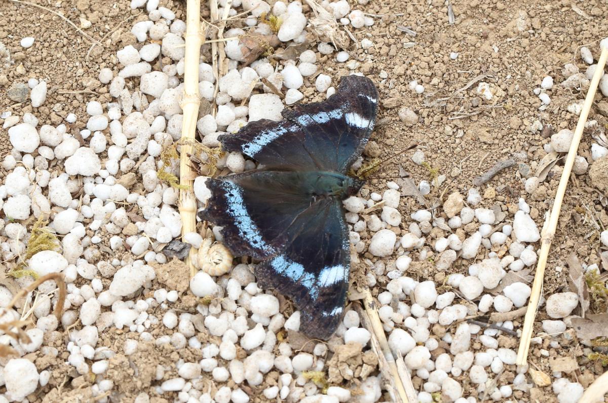 f:id:butterflyer:20190830212156p:plain