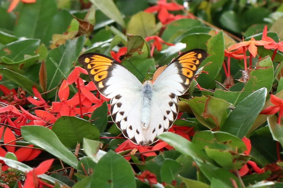 f:id:butterflyer:20190901202207j:plain