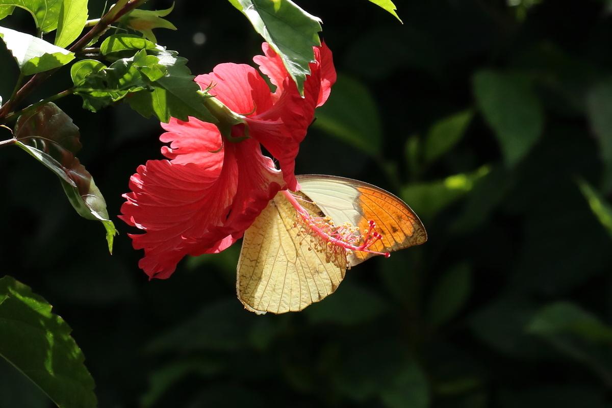 f:id:butterflyer:20190901202225j:plain