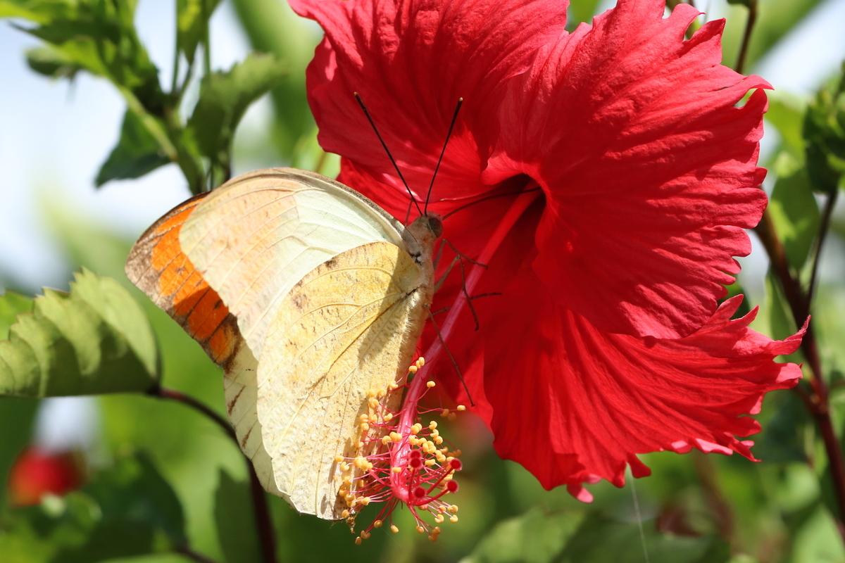 f:id:butterflyer:20190901202248j:plain