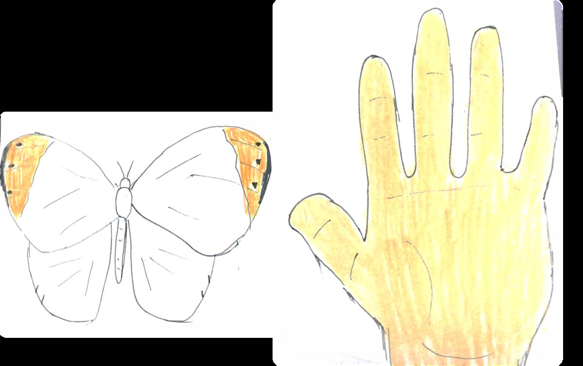 f:id:butterflyer:20190905190852p:plain