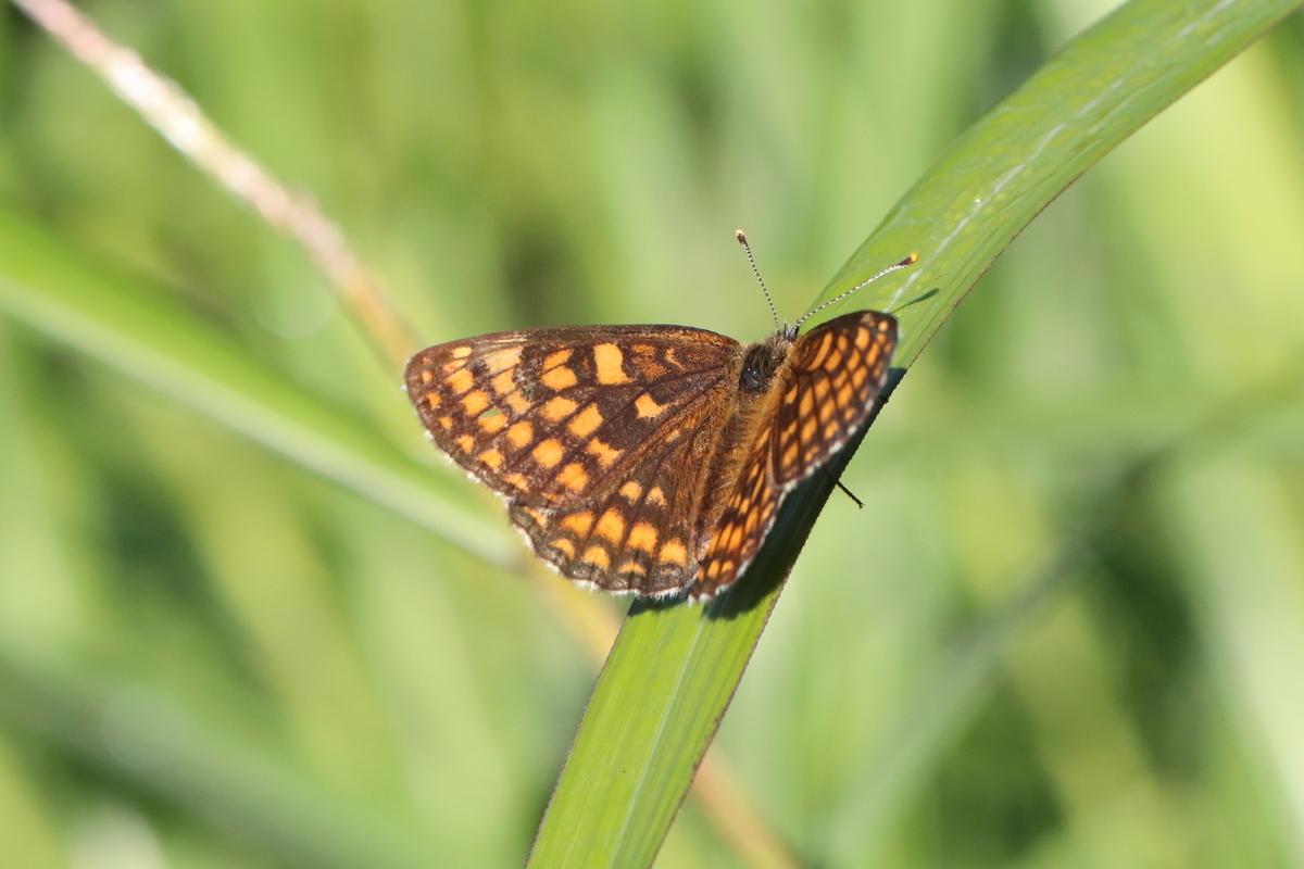 f:id:butterflyer:20190905225632j:plain