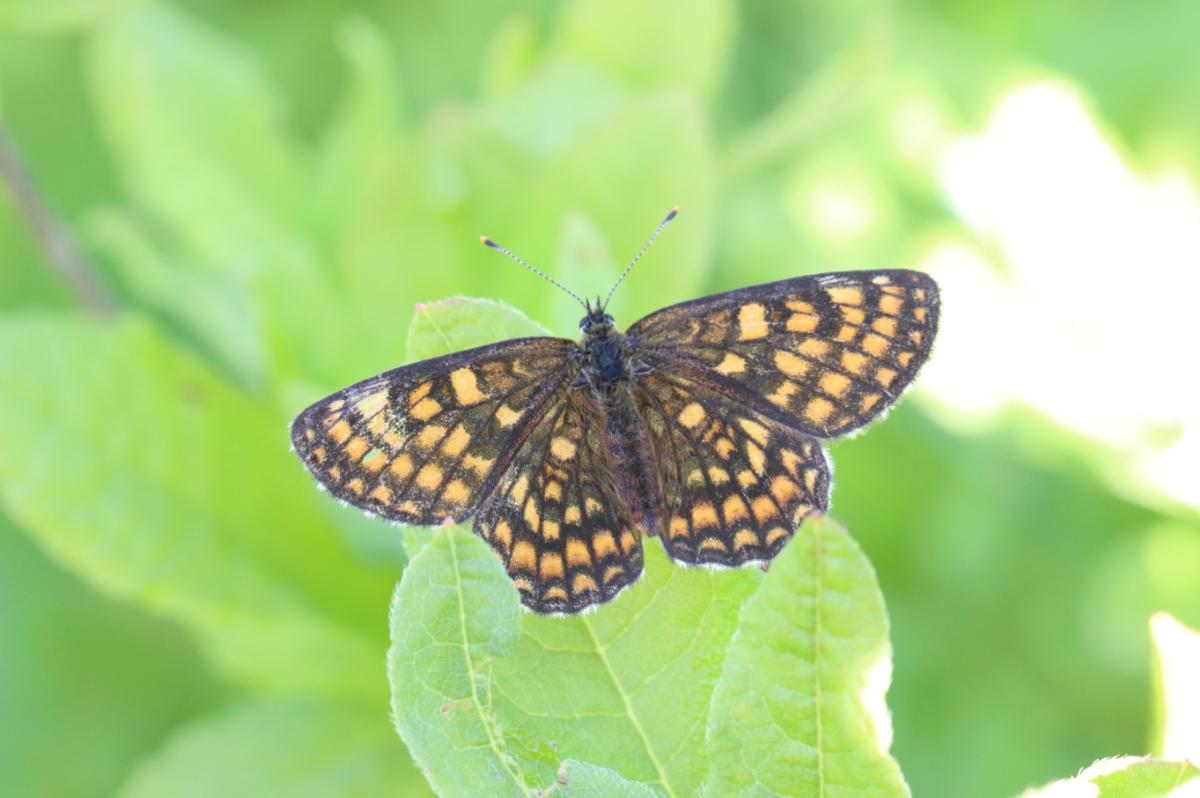 f:id:butterflyer:20190905225836p:plain