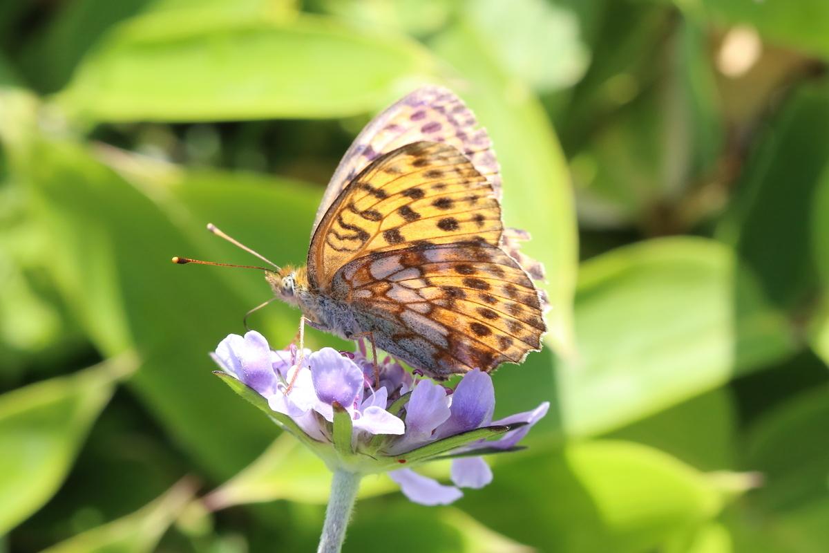 f:id:butterflyer:20190905231048j:plain