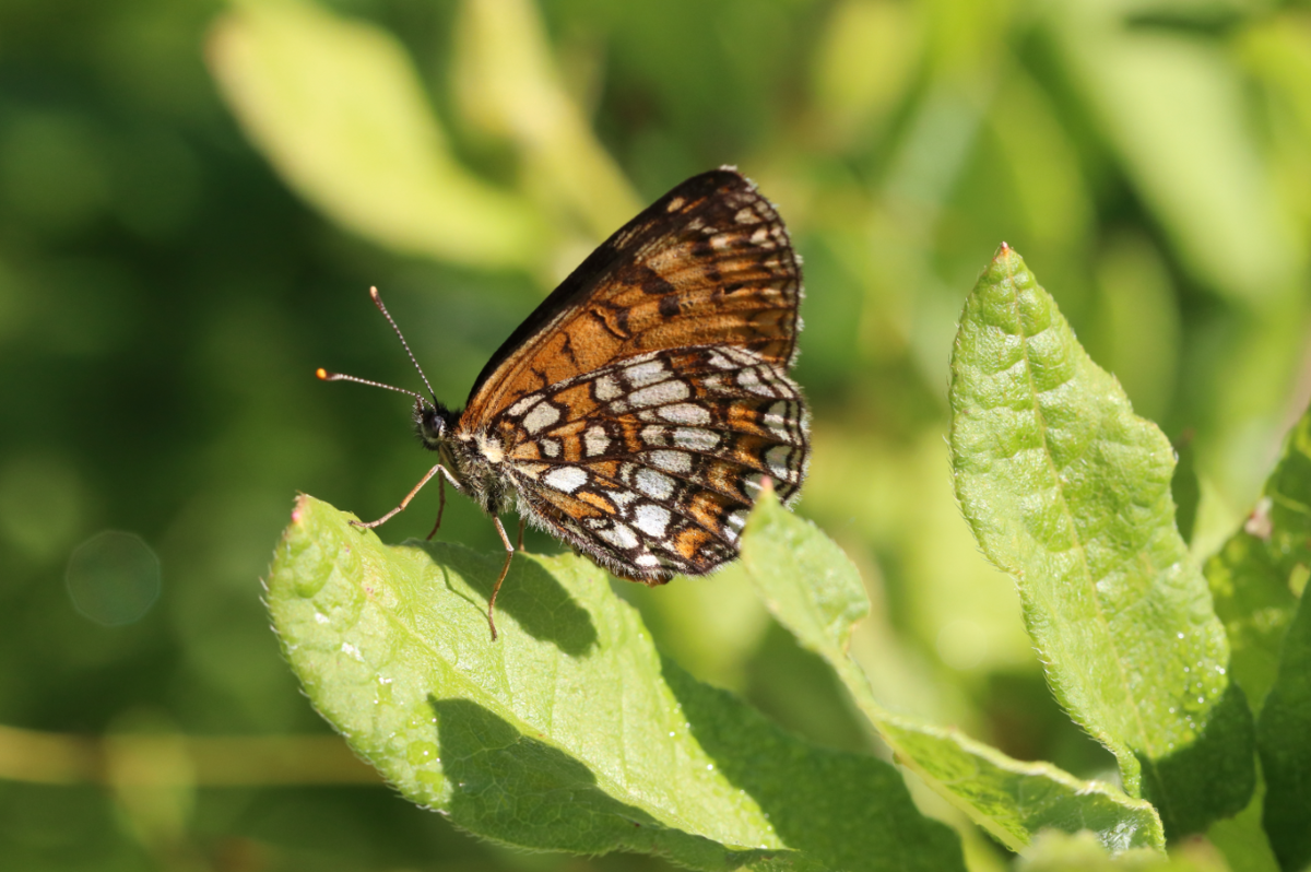 f:id:butterflyer:20190905233621p:plain