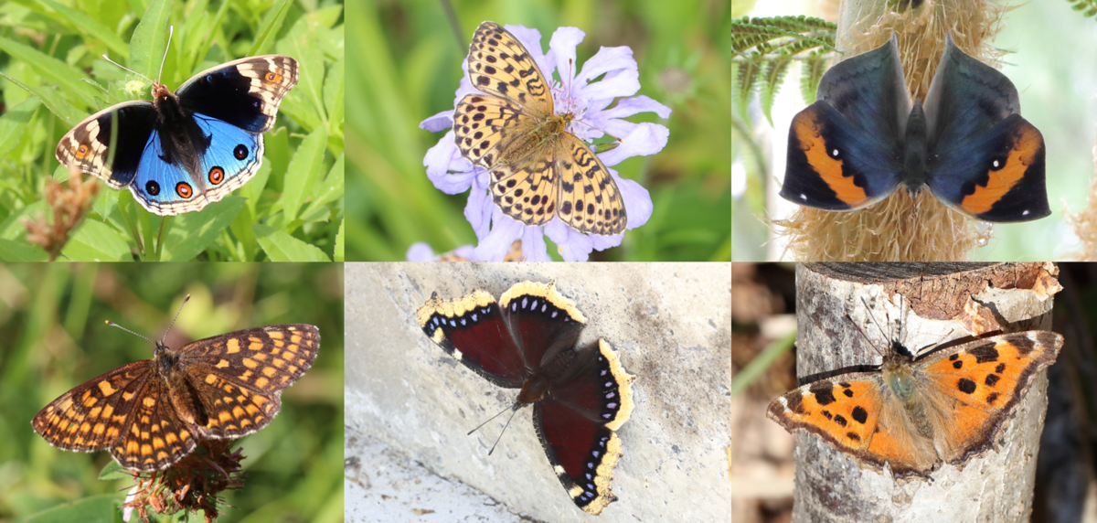 f:id:butterflyer:20190907222011p:plain
