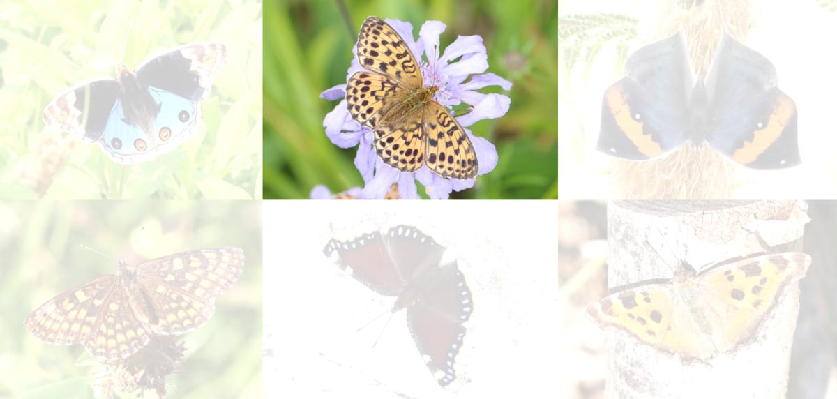 f:id:butterflyer:20190907222255p:plain