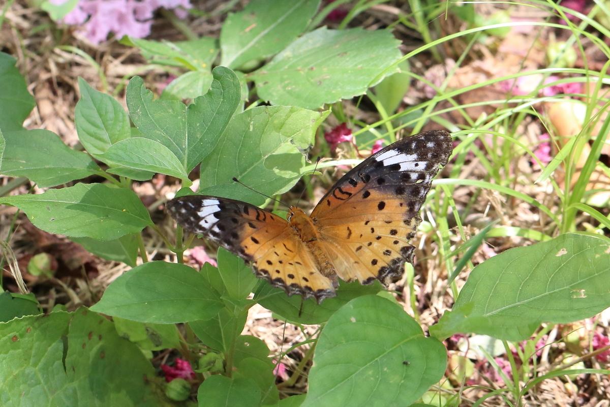 f:id:butterflyer:20190908225348j:plain