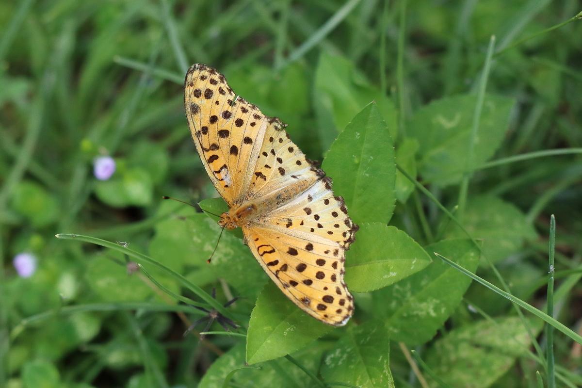 f:id:butterflyer:20190908225437j:plain