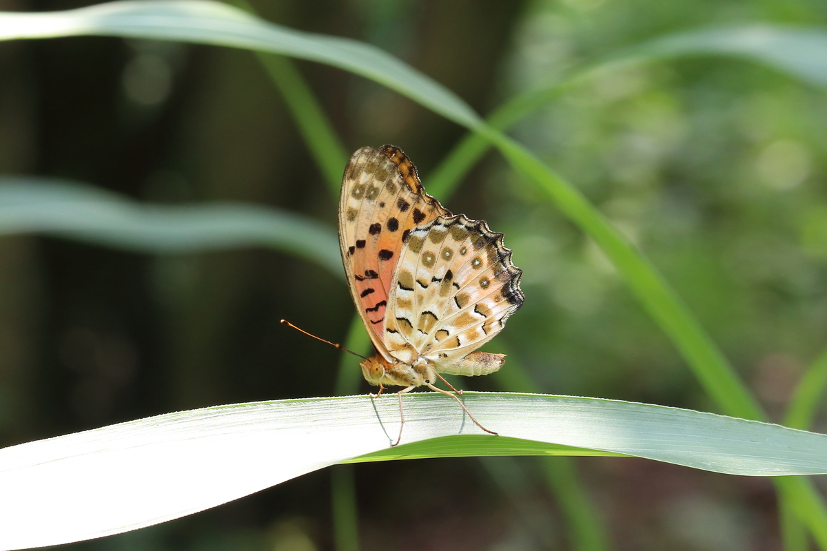 f:id:butterflyer:20190908225556j:plain