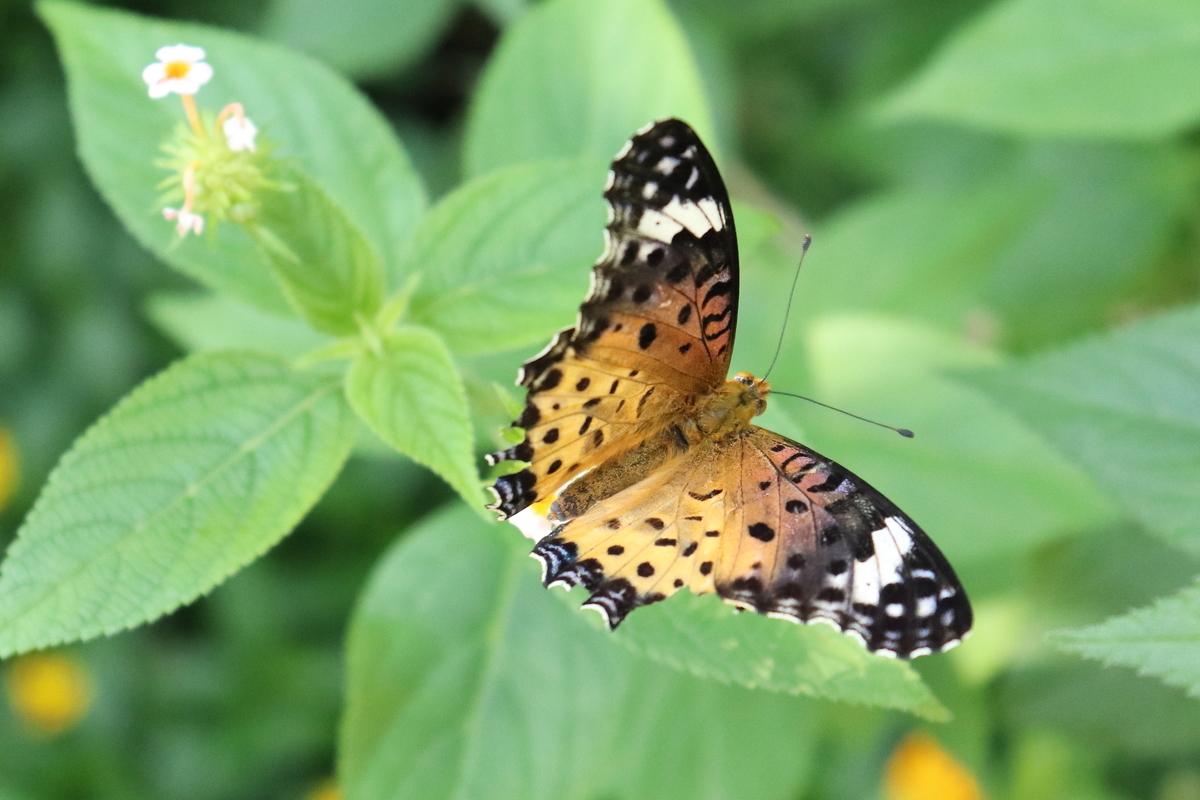 f:id:butterflyer:20190910183906j:plain