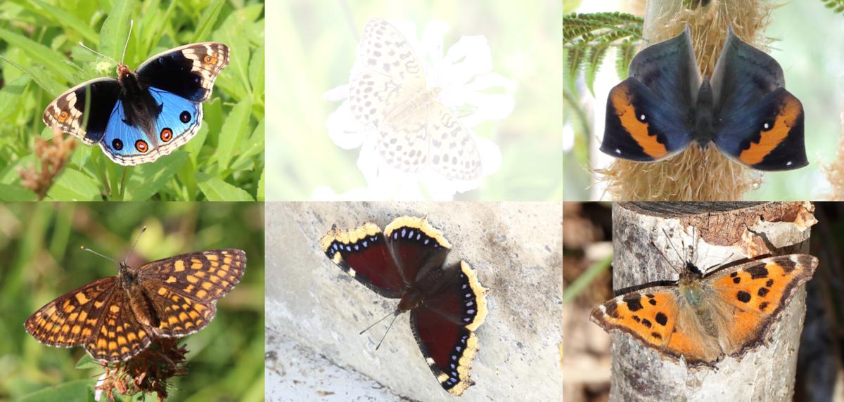 f:id:butterflyer:20190912184201p:plain
