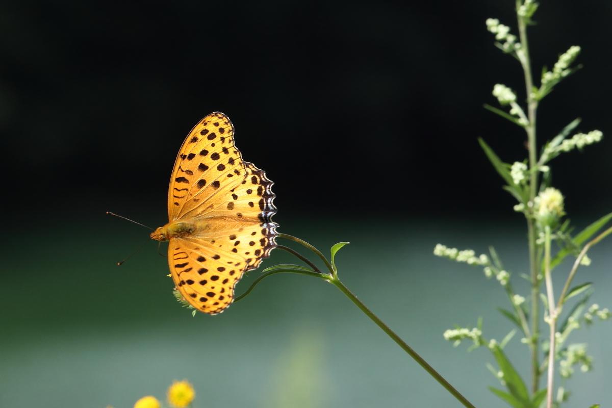 f:id:butterflyer:20190915212217j:plain